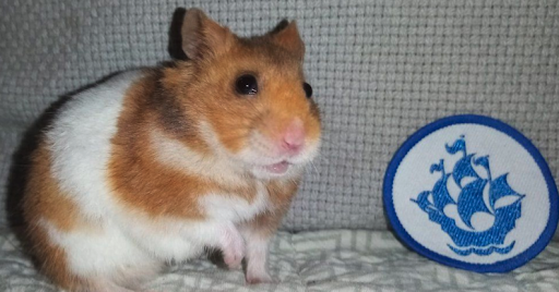 hamster with blue peter badge